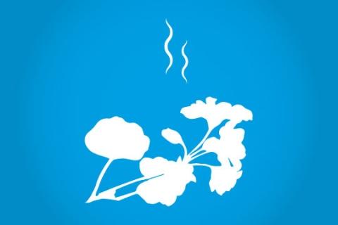 TheBlueBeetle-Geranium-scent